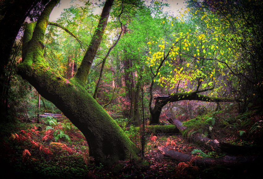 Muir Woods, Megan Crandlemire Photography