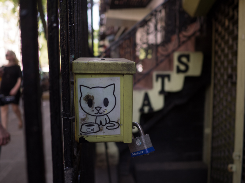 ellie's the place for cats, east village, Megan Crandlemire Photography