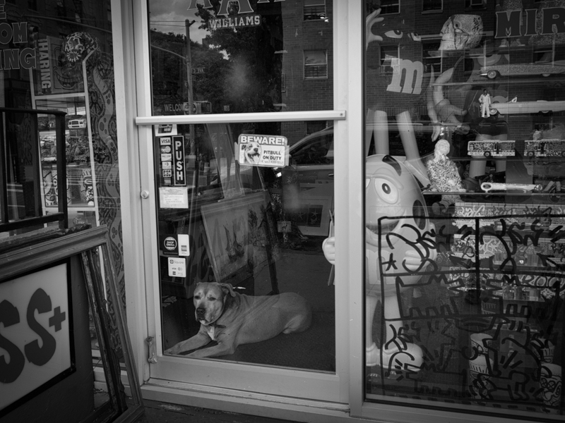 east village beware of dog, he will kiss you, Megan Crandlemire Photography